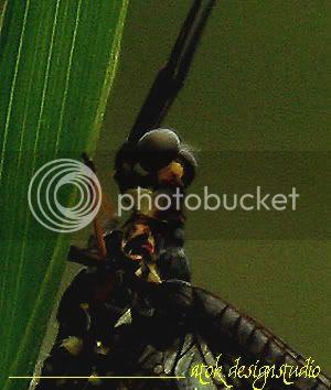 macro alien 02
