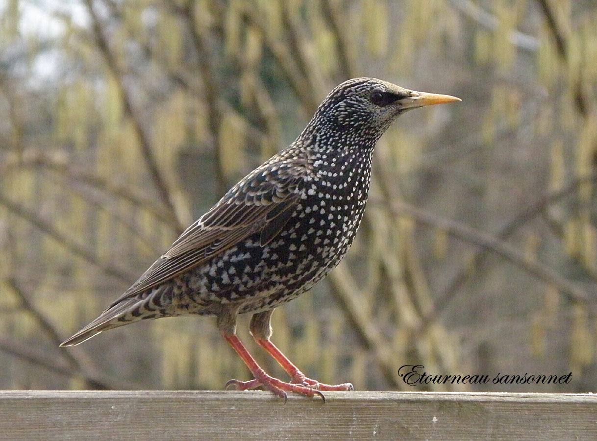 Les 89 Meilleures Images De Oiseaux Du Jardin En 2020