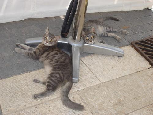 Mirror cats 2