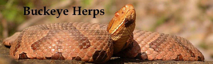 The Buckeye Herps Blog