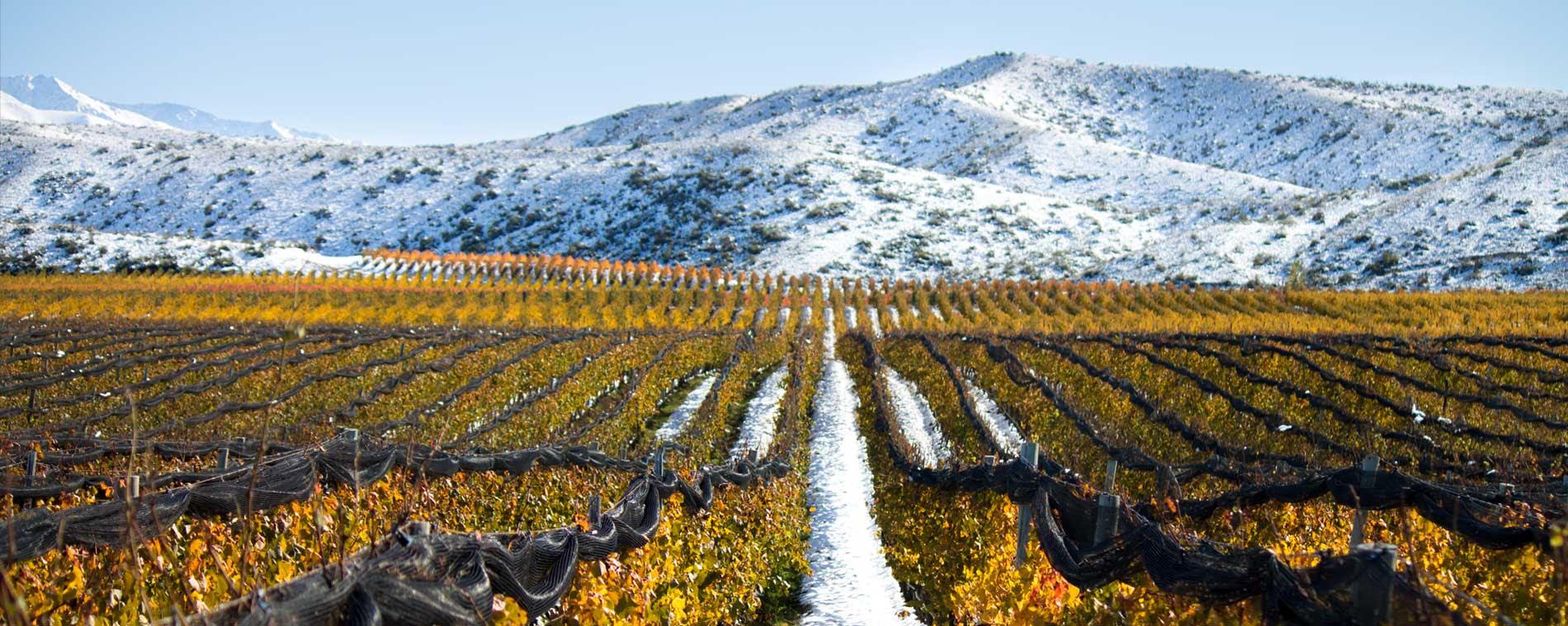 Resultado de imagen para viñedo catena