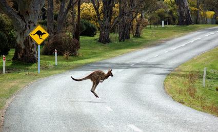 Картинки по запросу фото австралийцы в дороге