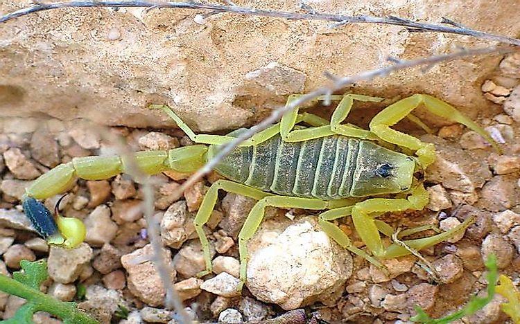 Image result for desert animals