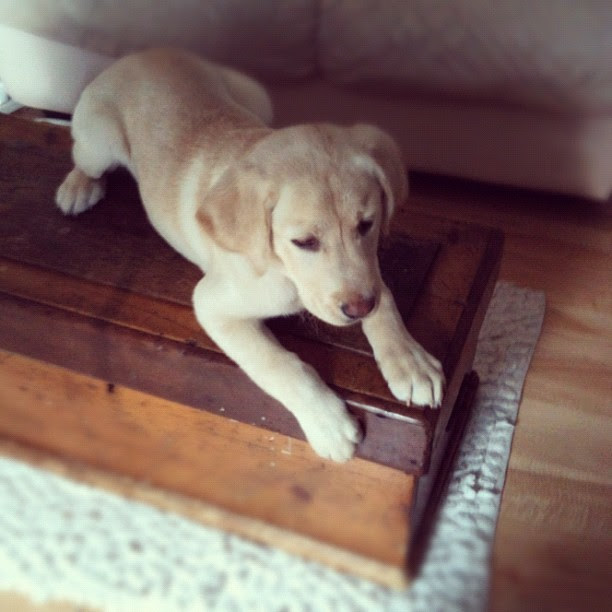Ruh Row. Puppy on a table.
