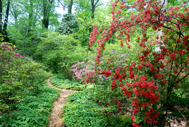 Lee Garden path