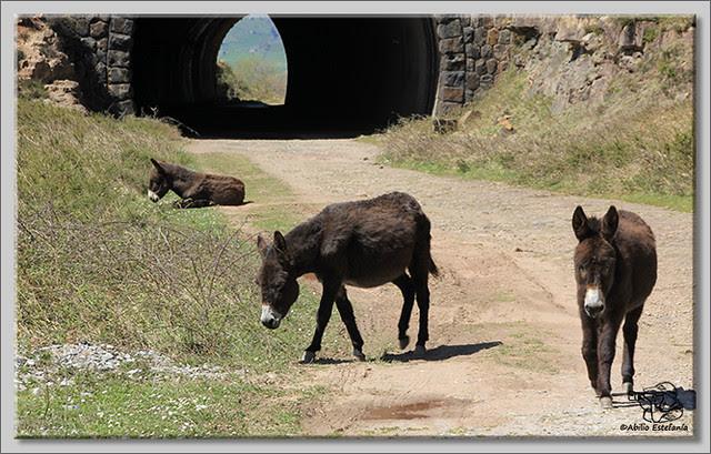 17 Tunel de la Engaña (Cantabria)