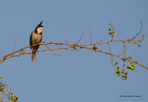 Heb-sprw by Chakradhar Kaveri