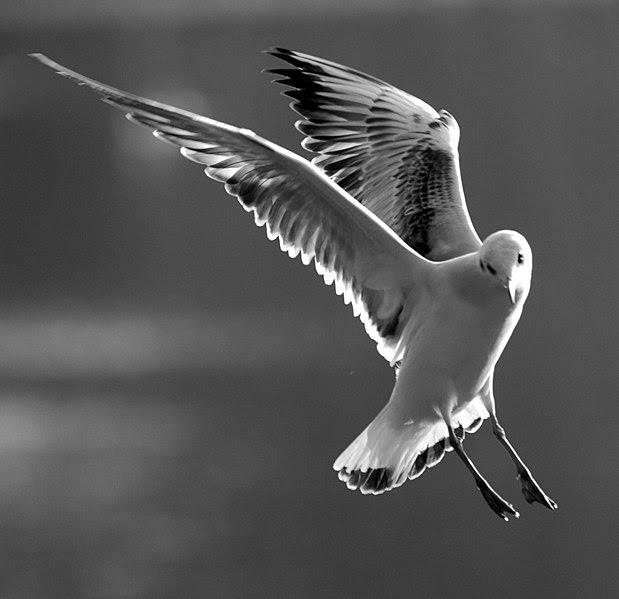 File:Bird at Claremont, Surrey.jpg