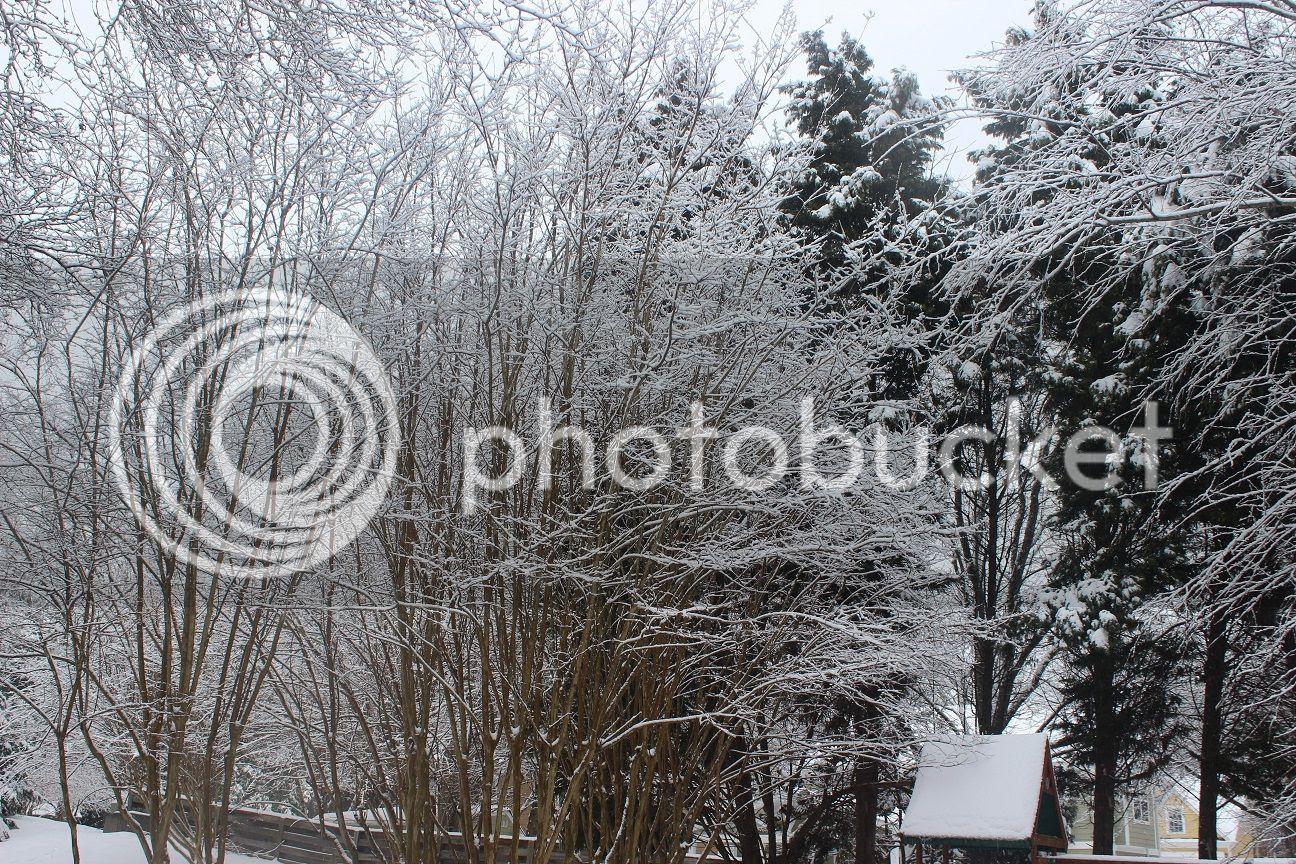 photo snow22_zpsa1ab0755.jpg