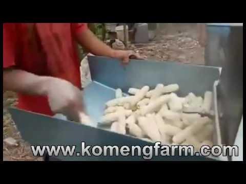 Penggilingan janggel jagung menggunakan chooper multifungsi penggerak 8 pk