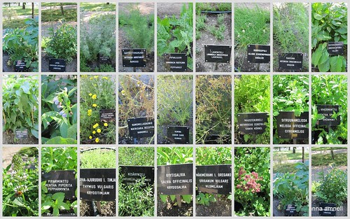 Turku Castle -herbs by Anna Amnell