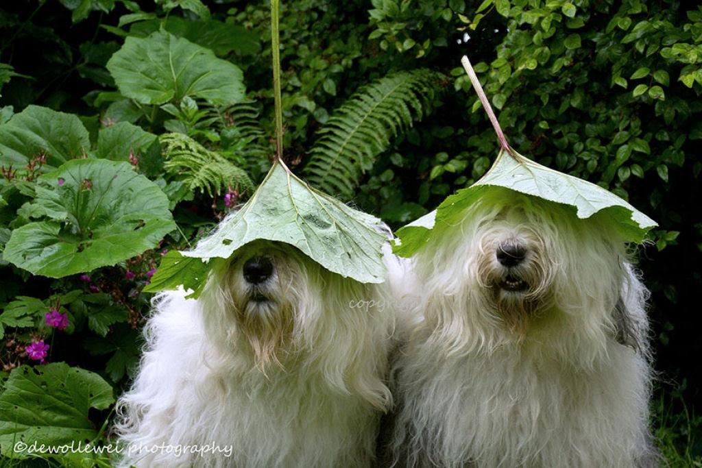 Estas fotogênicas irmãs bobtail fazem pose até para relâmpagos 01