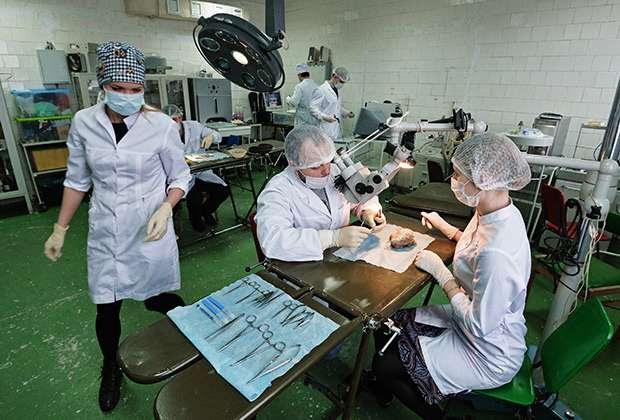 Медицинские вузы готовят настоящих неучей вместо лекарей