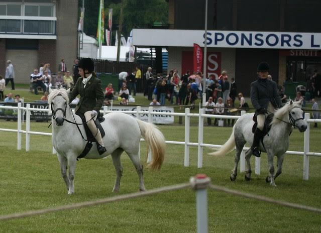 Ridden Eriskay Ponies