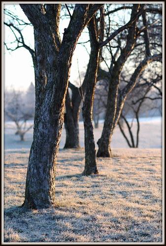 frosty sunrise 4