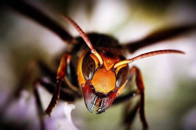 Serangga Paling Mengerikan di Dunia