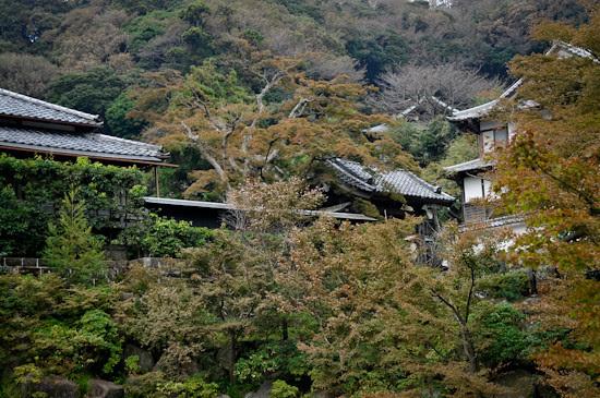 20111014-_DSC0928enkakuji