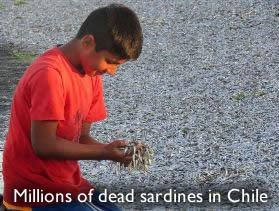 Νεκρά σαρδέλες Χιλή