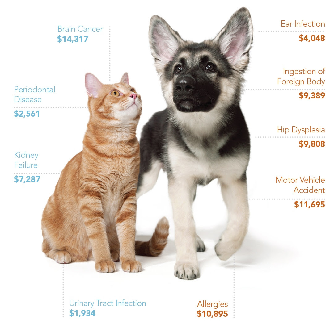 Affordable Pet Insurance Hartford County Connecticut