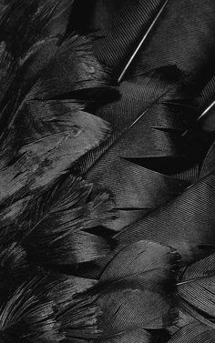 Black, feathers, texture, pattern, layer, exotic, detail