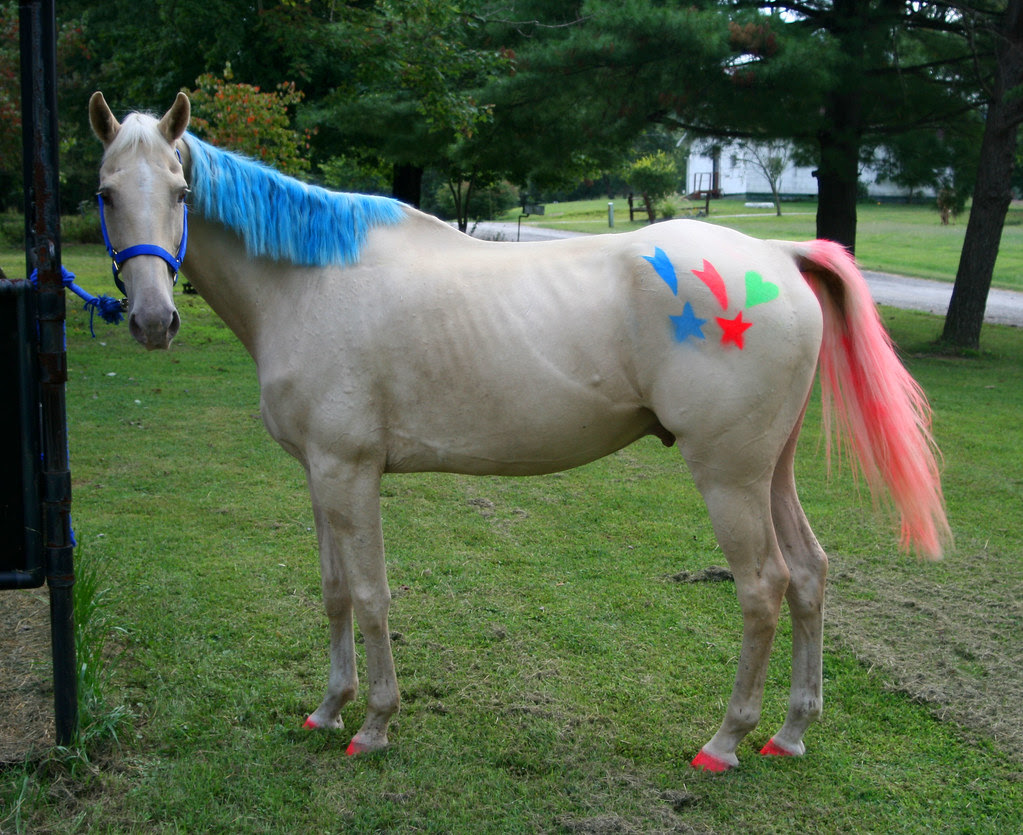 Horse hair 10 points up for grab? | Yahoo Answers