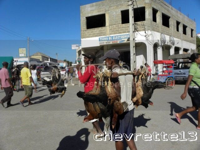 http://i1252.photobucket.com/albums/hh578/chevrette13/Madagascar/DSCN0276640x480_zps8133bdaa.jpg