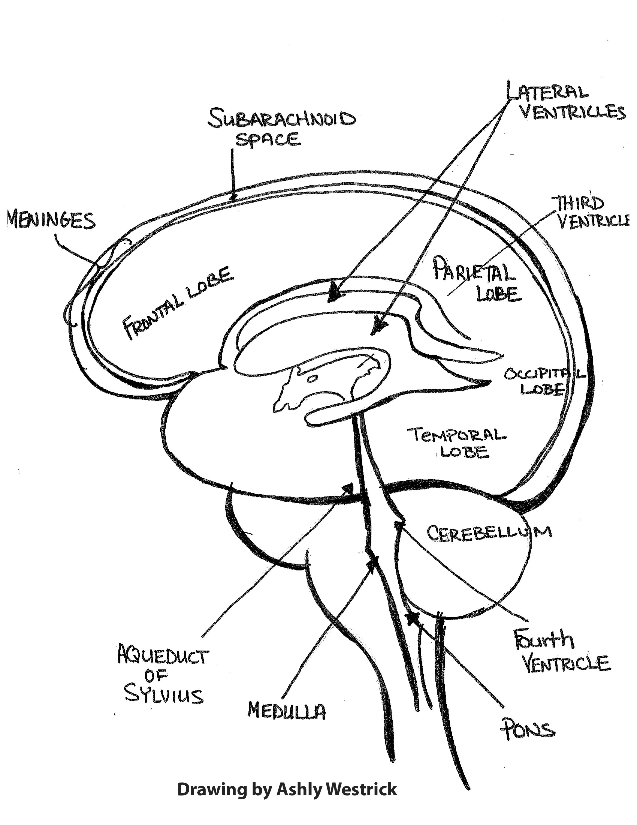 Ashly Brain