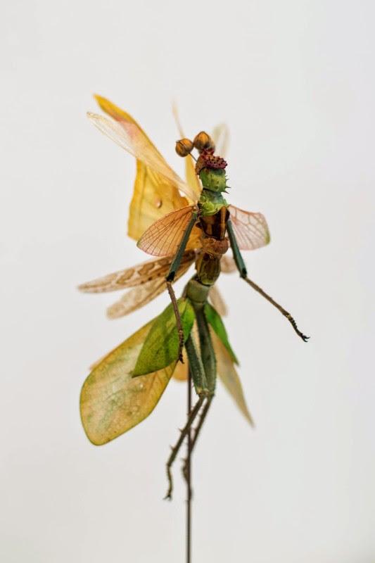 fee insecte graine morceau assemblage 07 533x800 Les fées de Cedric Laquieze