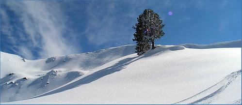 White Winter Snow 1