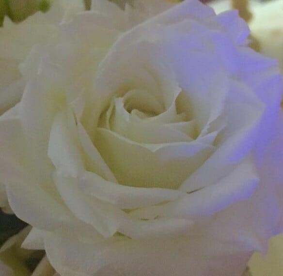 Ana Hickmann rosa