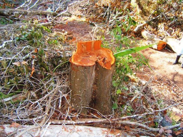 Deforestan Loma de El Chivo
