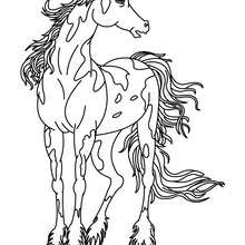Dibujos Para Colorear Caballo Frison Eshellokidscom