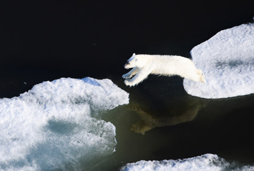 Florian Schulz's To the Arctic Intimate Photographs of Arctic Wildlife