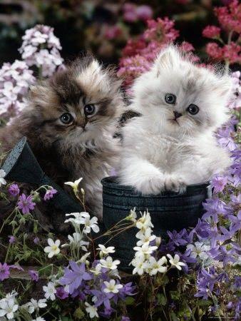 Precious kittens