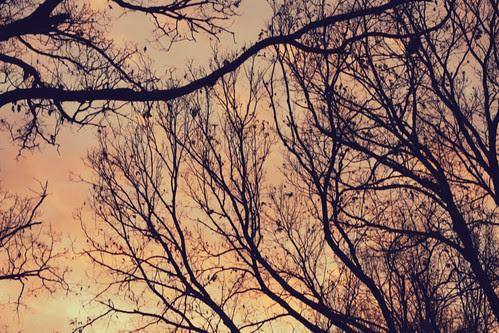 winter morning (04:365)