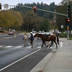 horses n cars