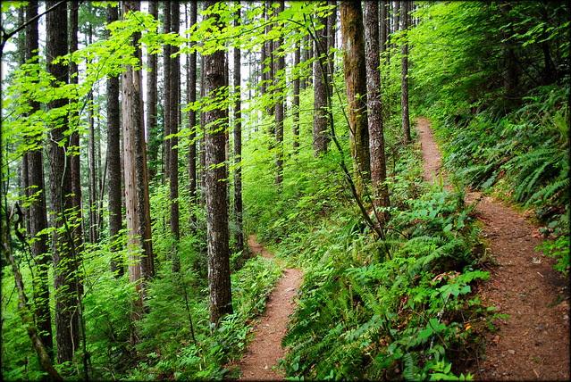 Hunchback Mountain - Mt. Hood National Forest