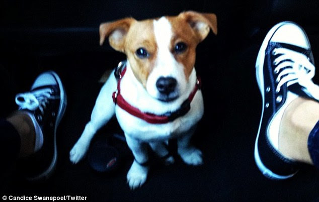 'Going to work with my mummy': Candice told fans her dog would be accompanying her on Wednesday