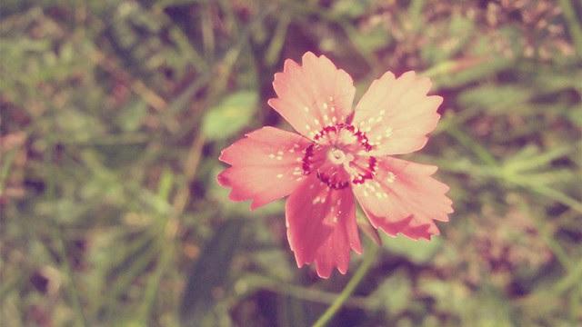 pink-vintage-flower-250426