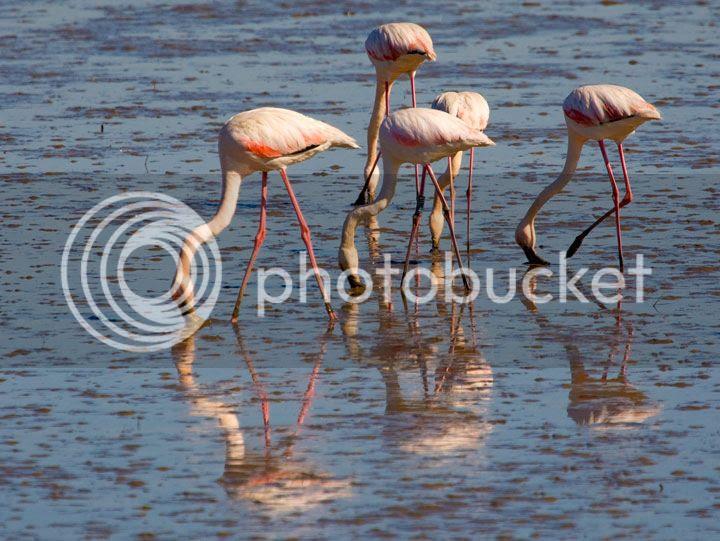photo _Flamingos_zps47061bc0.jpg