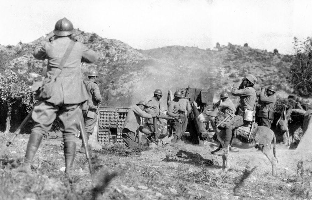 Os animais também lutaram na Primeira Guerra Mundial 39