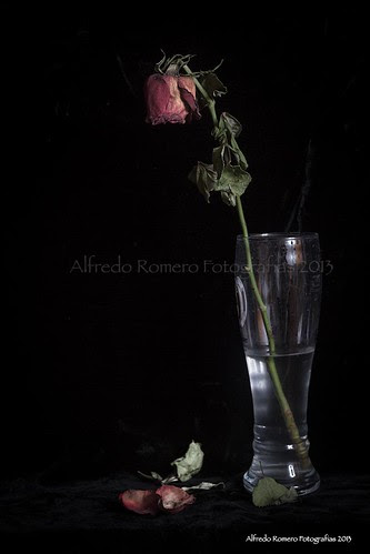Marchita by Alfredo Romero Fotografias 