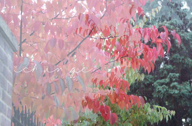 photo autumn7_zps9e7e9685.jpg