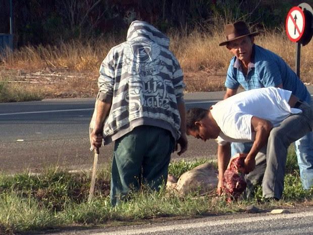 Animais que morreram foram desossados e levados por usuários em plena Fernão Dias (Foto: Reprodução EPTV)
