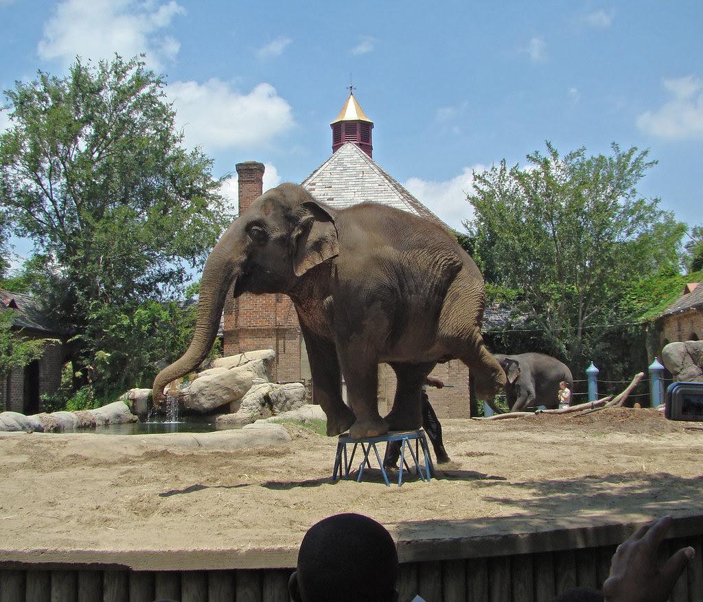 DSC06451 Audubon Zoo elephant