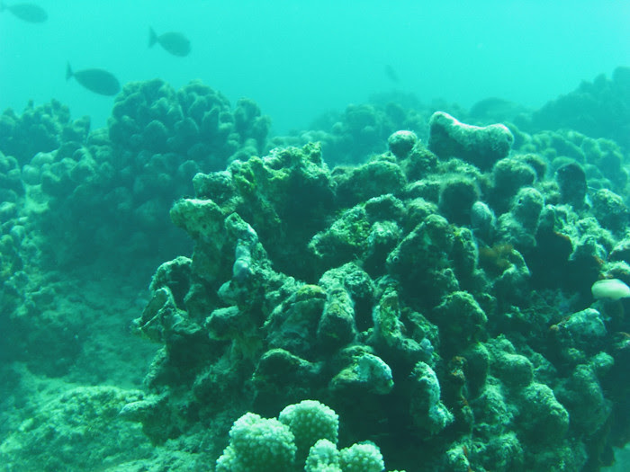 scuba diving oahu 214