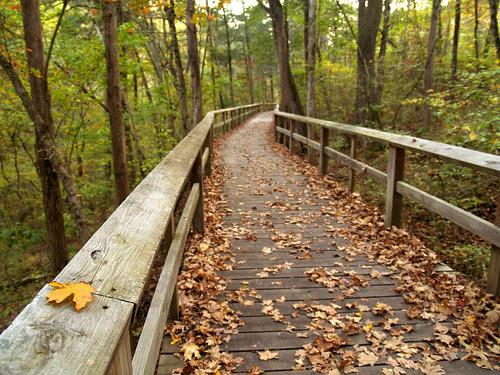Fall at the boardwalk