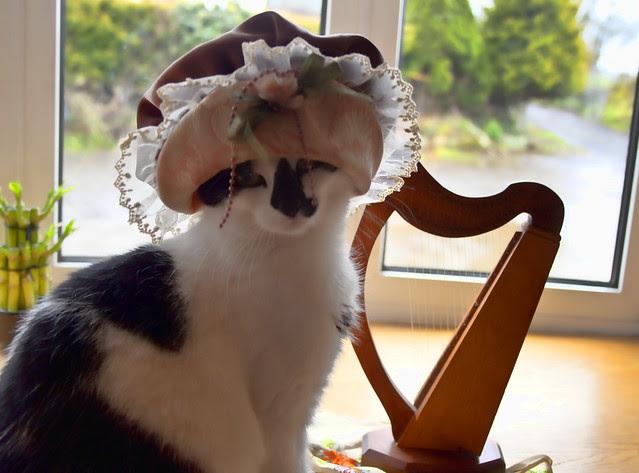 Irish Colleen Cat
