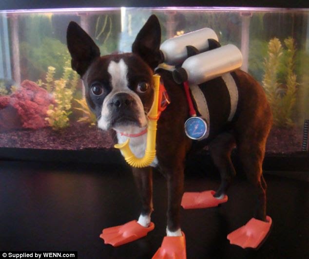 Professional diver? Echo wears flippers, and carries oxygen tanks on its back in the underwater themed display