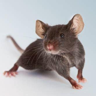 Find & Order Mice